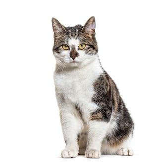 앉아 제거 고양이, 흰색 절연