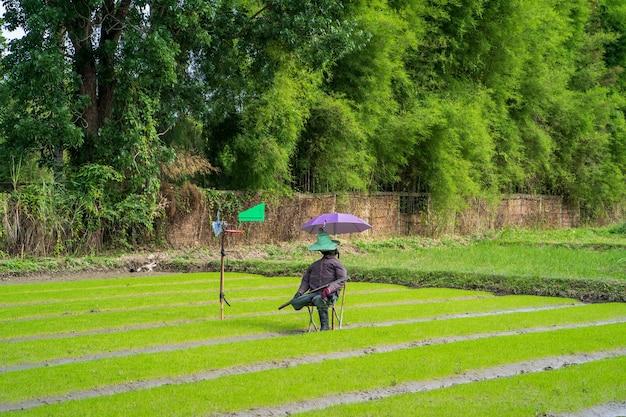 농업 분야에 앉아 허수아비