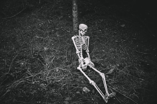 Sitting skeleton leaned on tree in dark forest