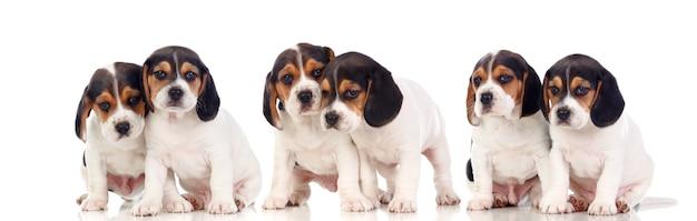 分離された6つの美しいハンター犬