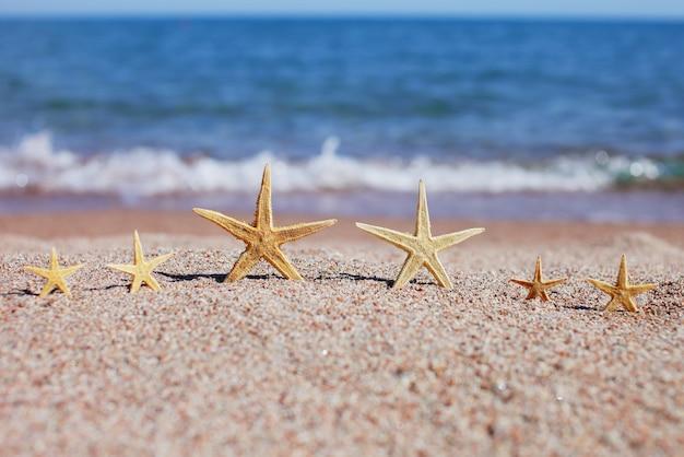 Шесть морских звезд на песчаном пляже.