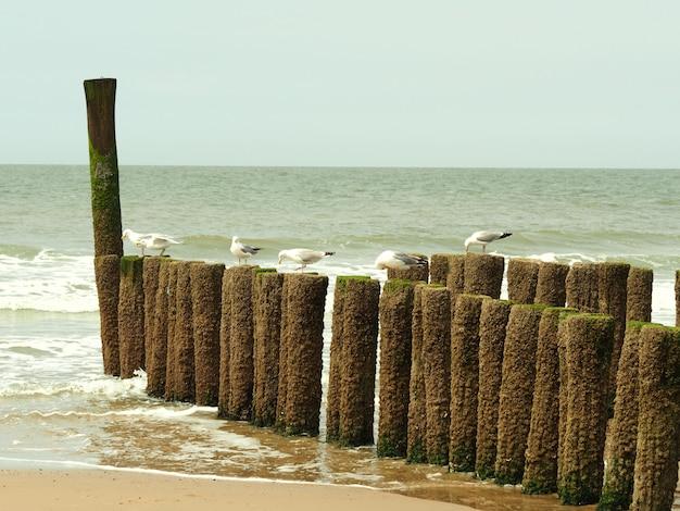 황금빛 모래 해변에 나무 재료에 서있는 6 개의 흰 갈매기