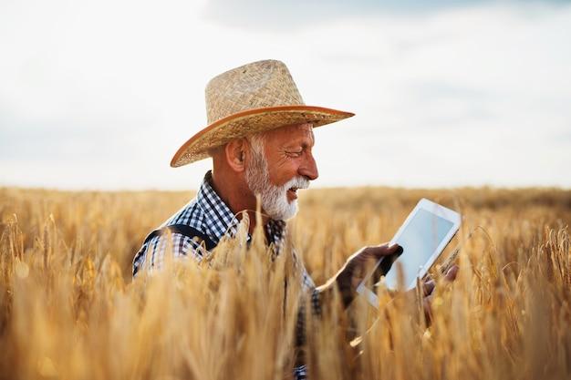 60세의 농업 경제학자는 밀밭을 검사하고 태블릿 컴퓨터를 사용합니다.
