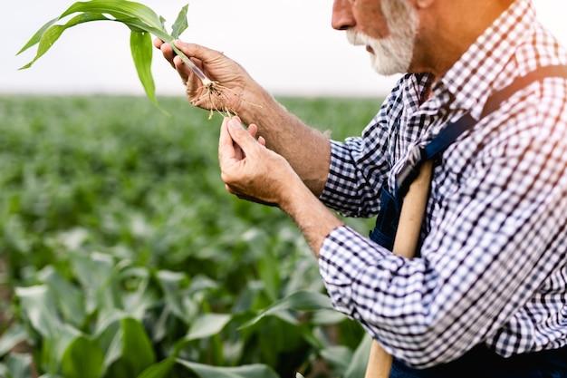 Шестидесятилетний бородатый фермер управляет своим полем по выращиванию кукурузы.