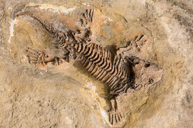 프라하 동물원에서 돌에 고대 파충류의 해골 화석 기록