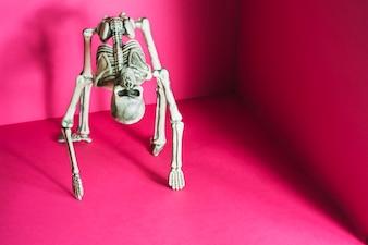 Skeleton in bridge pose