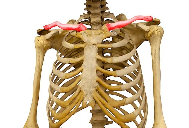 白い背景で隔離の照らされた赤い鎖骨を持つ男の骨格。高品質の写真