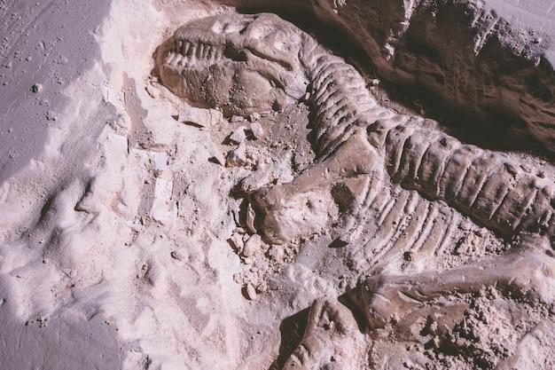 Скелет динозавра. искандер tyrannosaurus rex в ископаемом камне.