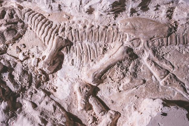 Скелет динозавра. искандер tyrannosaurus rex в ископаемом камне. Premium Фотографии