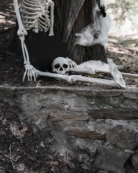Skeleton with disconnected head sitting in woods