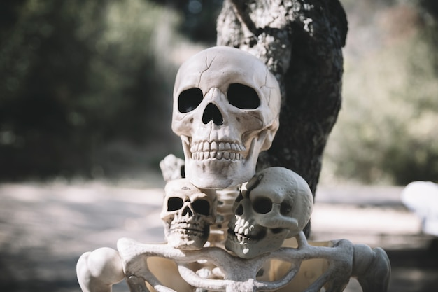 Skeleton with sculls leaned on tree in park