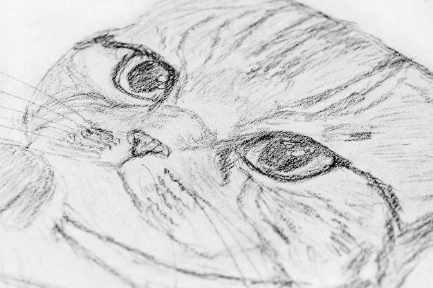 Sketch in a notebook: pencil drawing of a cat.