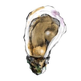 牡蠣の殻のスケッチ