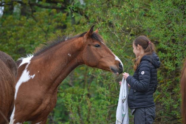 スキューボールドの馬は人に食べ物を求めます。