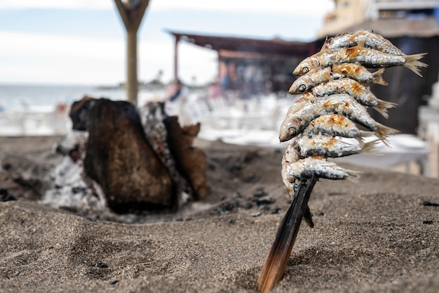 Skewers of sardines pricked over grilled earth on the spanish coast