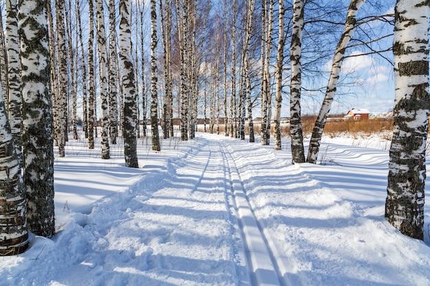 Ski run in a winter birch forest cross country ski trails