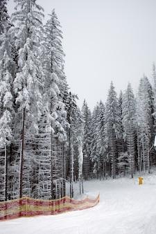 雪に覆われた針葉樹林のスキー場
