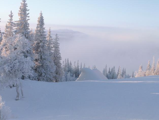 霧の中のスキー場と熊の形をした雪の吹きだまり。
