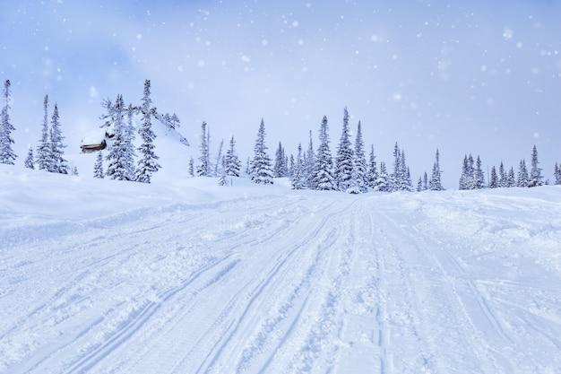 스키 슬로프와 눈, 푹신한 눈 속의 전나무, 구름 속의 하늘, 겨울 풍경, 추운 날씨.