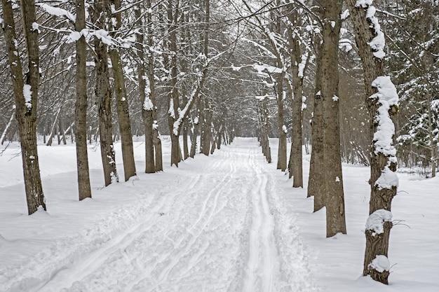 Лыжня в снегу вдоль аллеи деревьев в парке зимой.