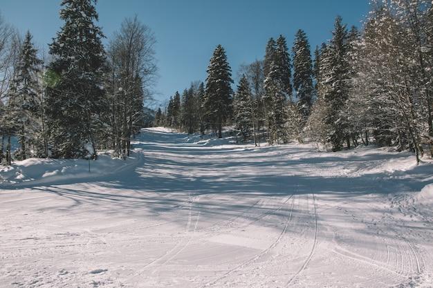 숲에서 스키 트랙