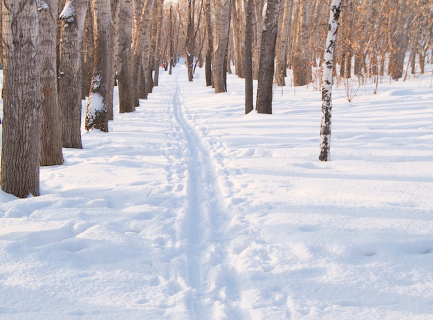 Ski track on snow in winter park for sports