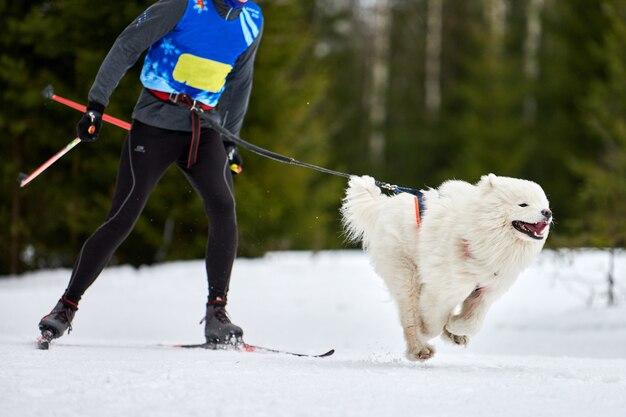 人とのスキージョリングドッグレース
