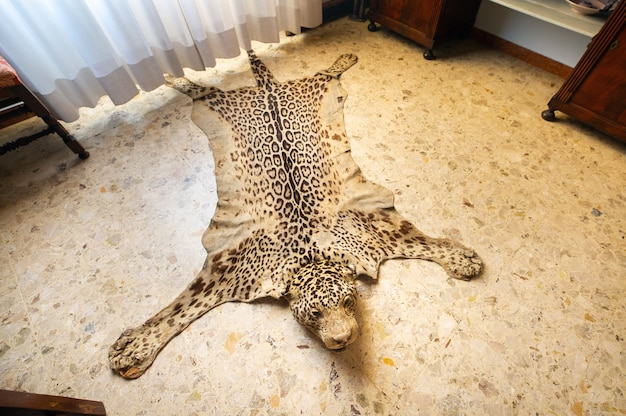 The skin of a dead leopard lay on the floor.