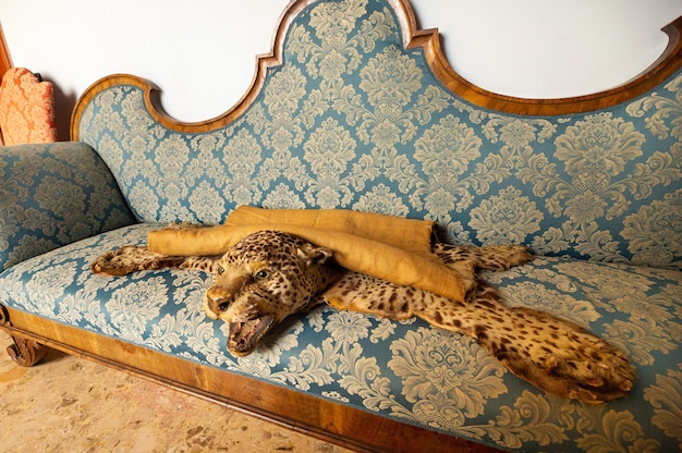 The skin of a dead leopard lying on the sofa.