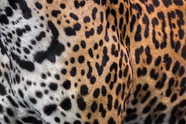 Skin and leopard pattern