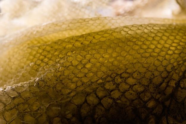 Кожа мертвой змеи