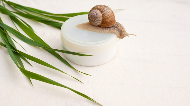 Skin rejuvenation cosmetics on white background with snail and green grass, cream with snail mucin, skin hydration, spa.