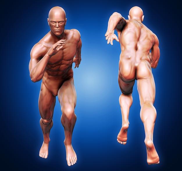 前部と後部のビューを走らせる皮膚の影の解剖学的な男