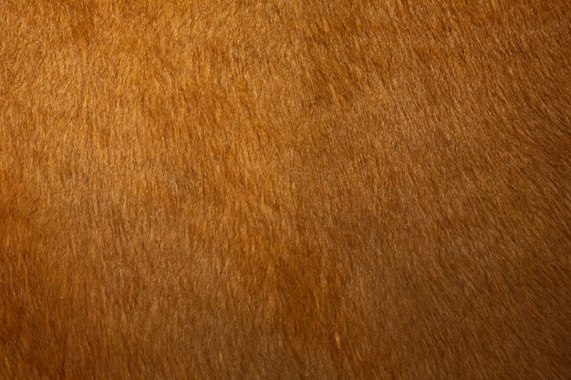 Skin texture of a red cow, closeup.