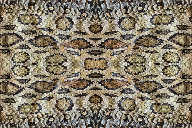 Skins of the snake