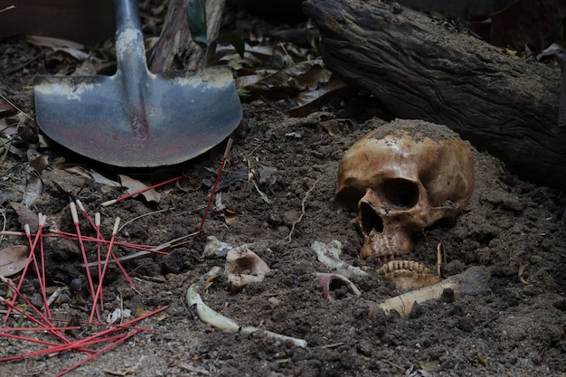무서운 묘지의 구덩이에서 파낸 두개골과 뼈 / 정물화 및 선택적 집중