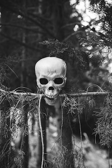 Skull biting fir branch in forest