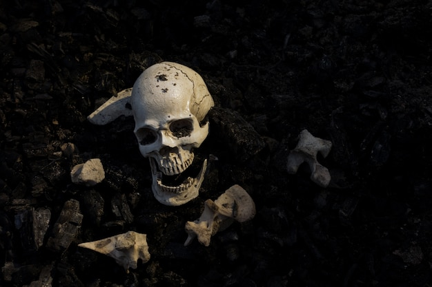 Skull and bones digged from pit in the scary graveyard which has dim light