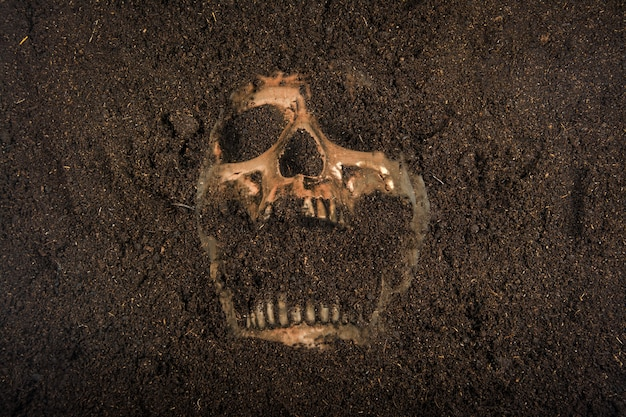 Skull buried in the ground