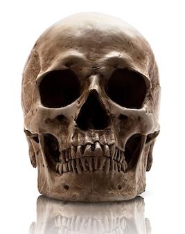 Рот закрытый черепом. изолированные
