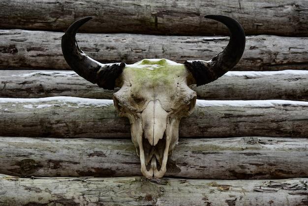 古い要塞の木製の壁に雄牛の頭蓋骨