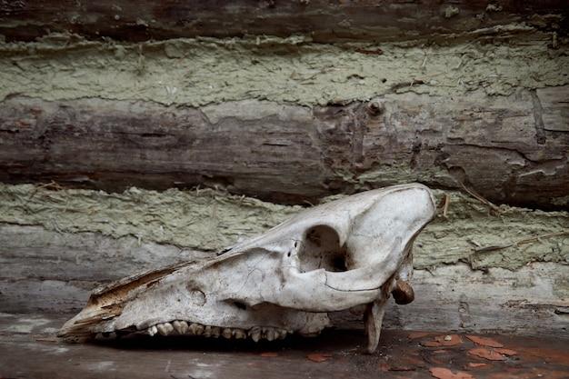 나무 회색 벽에 초식 동물의 두개골