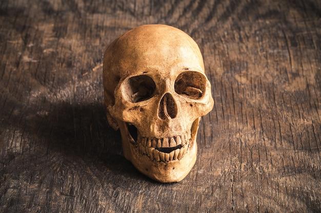 Skull on an old wooden background,phoney human skull on wooden floor,halloween concept