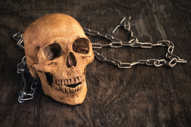 Skull on an old wooden background.
