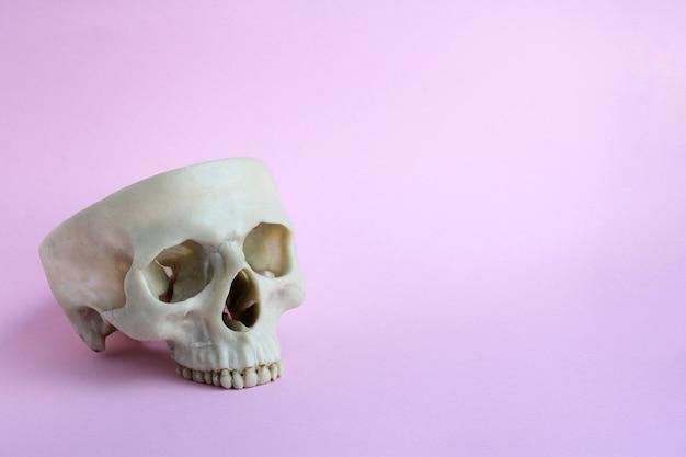ピンクの背景に頭蓋骨。ハロウィーンのコンセプト