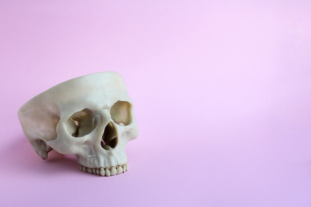 Skull on a pink background. the concept of halloween