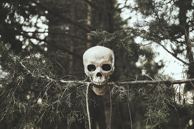 Skull snapping tree's twig in forest