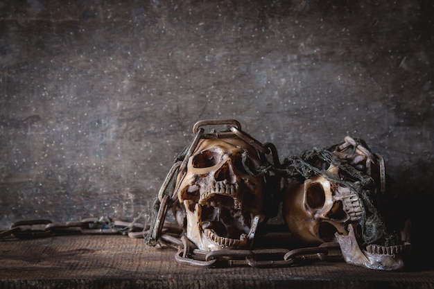Skull with chain in still life photography