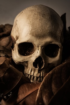 Skull with dry leaf, still life