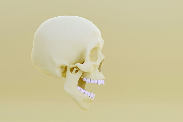 Skull with open jaw isolated on yellow